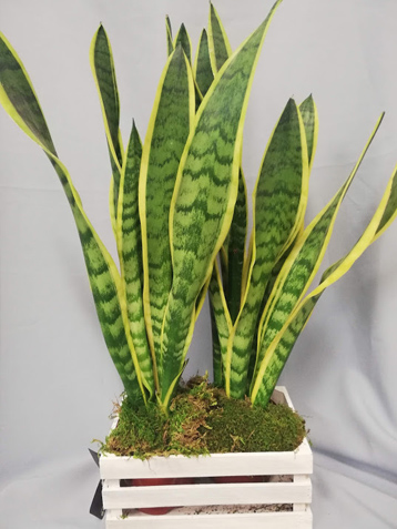 Plantas online
