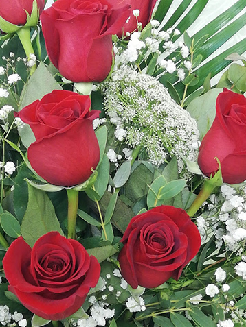 Rosas en Valencia